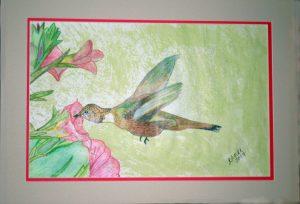 Dennis Hummingbird Rufous