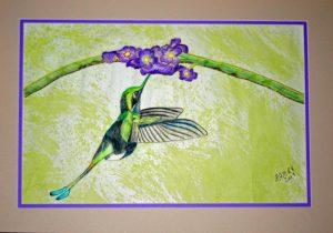 Wallace Hummingbird