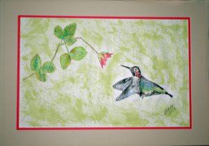 Donate Hummingbird Calypte Anna